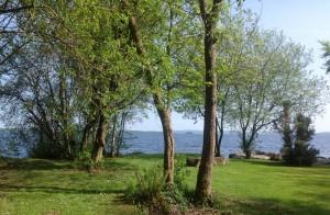 Cornode lakeshore